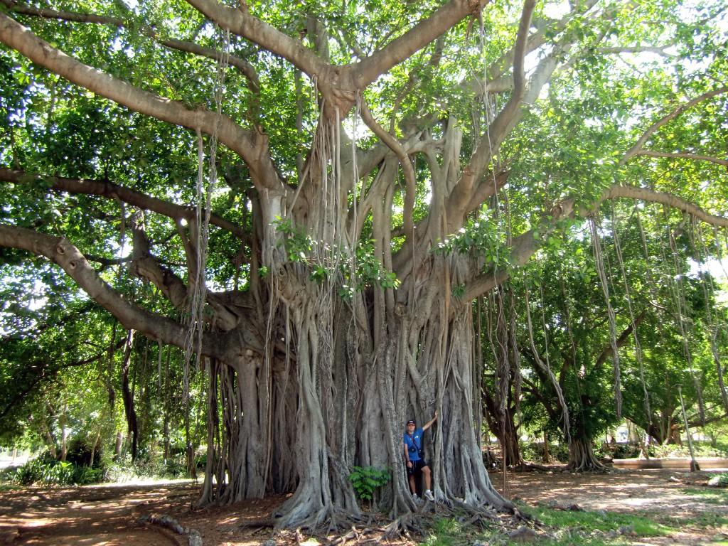 El árbol que camina
