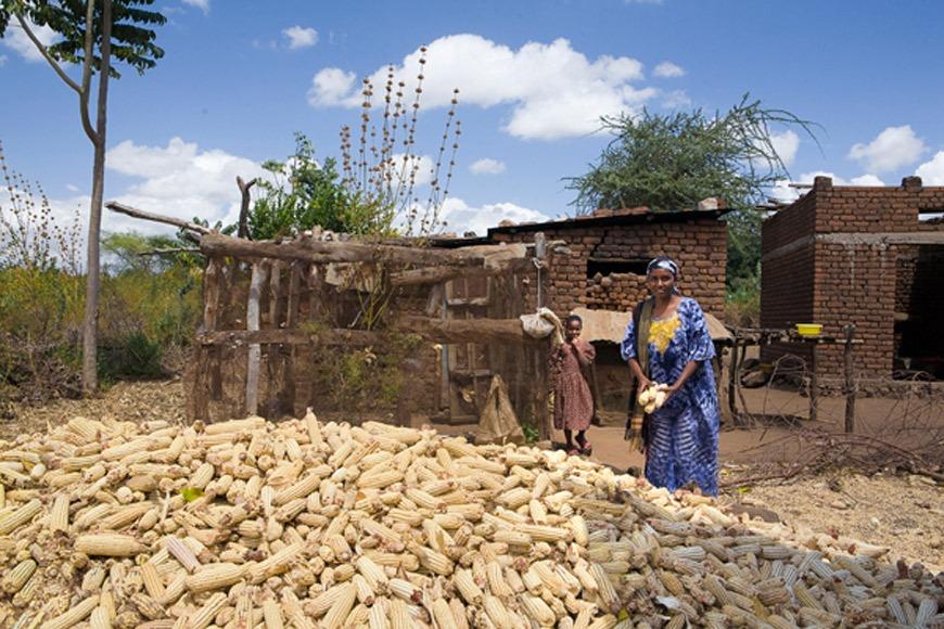 Cosecha de maíz en la localidad de Babati, Tanzania. / J. Marcos