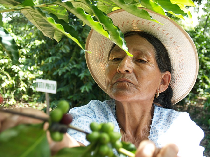 Una mujer boliviana recolecta café ecológico en la provincia Santa Cruz. / J. Marcos