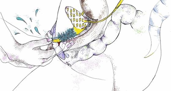 como eyacular estimulando la próstata