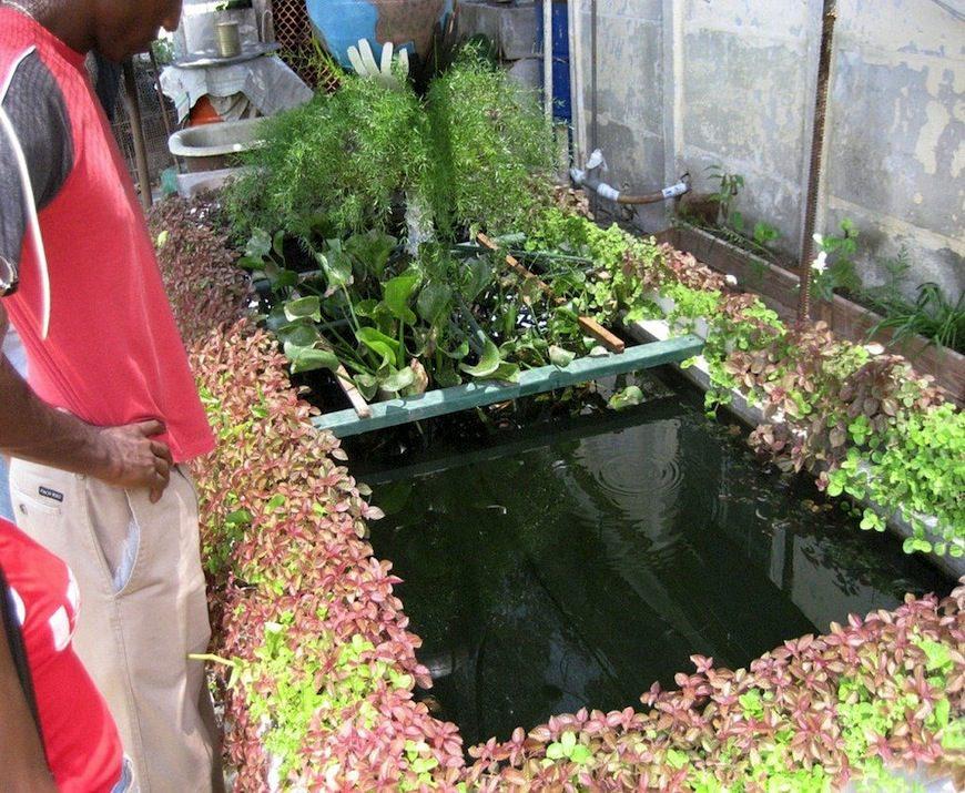 Sistema de permacultura donde la vegetación se combina con la crianza de peces./ Fundación Antonio Núñez Jiménez de la Naturaleza y el Hombre