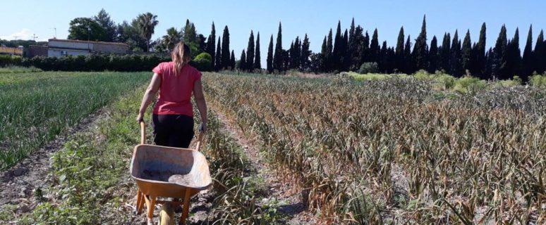 Una mujer camina de espaldas con un carretillo por su huerta ecológica.