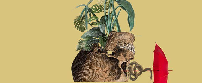 Collage de Señora Milton en el que una planta con flores brota de una calavera