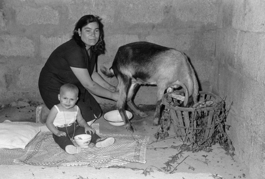 Unaempaquetadora ordeña a una cabra junto a su criatura en una cuartería durante el franquismo